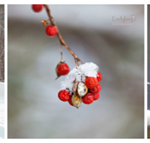 Wordless Wednesday:  Scenes of Winter from Ladybug Photography