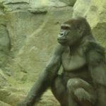 Kids Price Saturdays at the Zoo