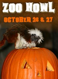 zoo howl 2013
