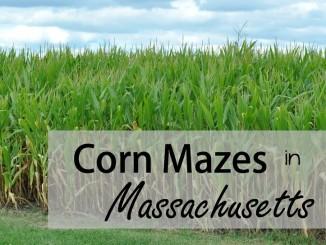corn mazes img