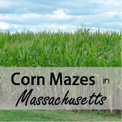 corn mazes thumb