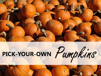 pick-your-own-pumpkins