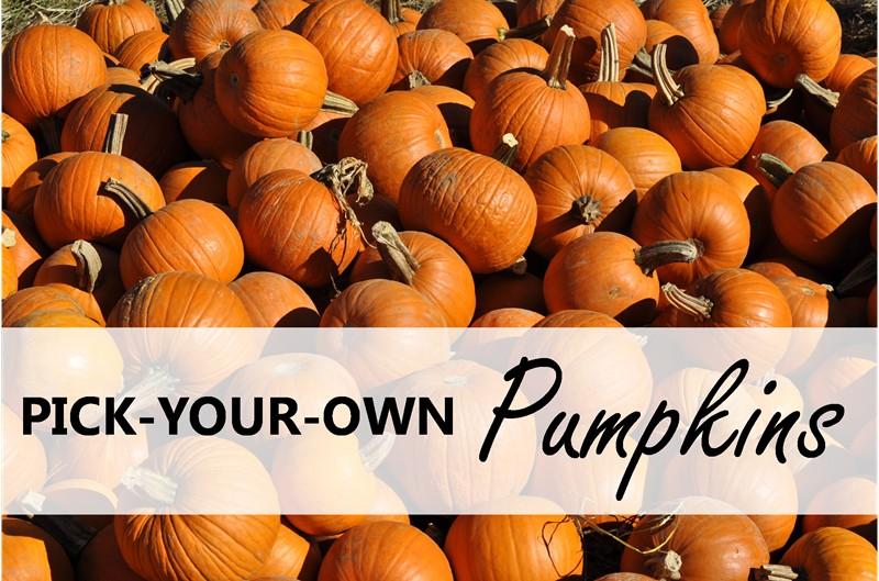 pyo-pumpkins